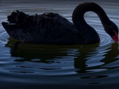 """Риск """"черного лебедя"""" вырос до рекорда"""