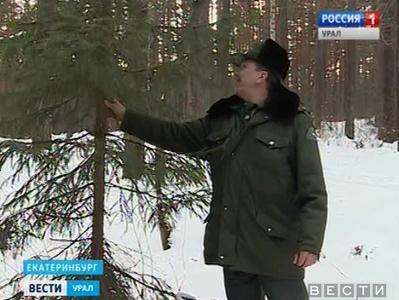 Накануне Нового года свердловские леса взяли под усиленную охрану