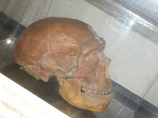 Исследователи сравнили ДНК неандертальцев и денисовцев с образцами больных раком современных людей. Они обнаружили следы древних вирусов в геноме наших современников <br /> ((фото Карма2/Wikimedia commons).)