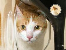 Система распознавания кошачьих морд разработана впервые