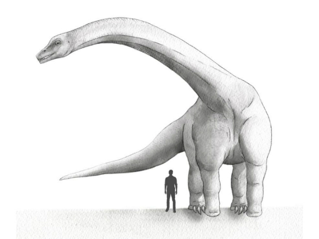 Динозавр-дредноут в сравнении с человеком (иллюстрация Emily M. Eng, NG Staff Source: Matthew C. Lamanna, Carnegie Museum of Natural History).