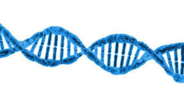 ДНК пищевых продуктов могут встречаться в образцах крови, но это не обязательно означает, что геном пищи путешествует по кровотоку (иллюстрация Pixabay).