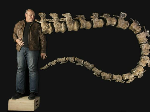 Палеонтолог Кеннет Лаковара и девятиметровый хвост титанозавра (фото Robert Clark, Excel Magazine, Drexel University).