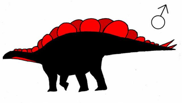 Внешний вид самца стегозавра, по мнению автора новой работы (фото Evan Saitta).