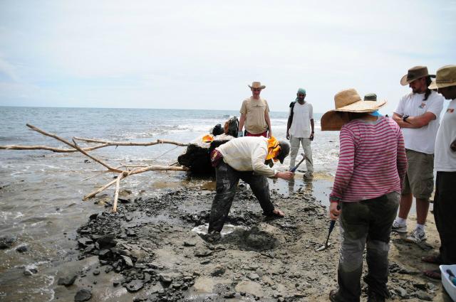 Учёные из Смитсоновского института работают на Карибском побережье Панамы 18 июня 2011 года (фото Jorge Velez-Juarbe / Smithsonian Institution).