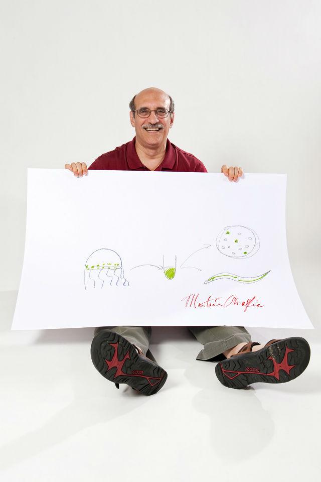 Мартин Чалфи, Нобелевская премия по химии за 2008 год