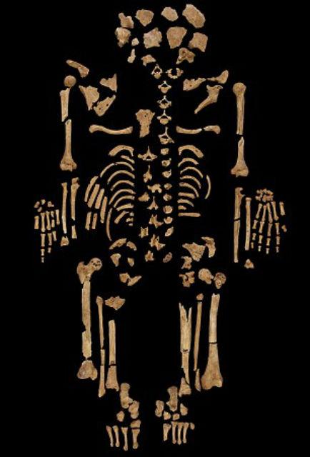 Полный скелет, собранный исследователями в лаборатории (фото Durham University).