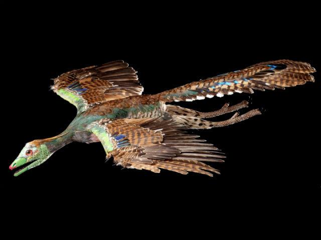 Реконструкция образа археоптерикса: яркий окрас и красивые перья служили для привлечения половых партнёров (фото BSPG).