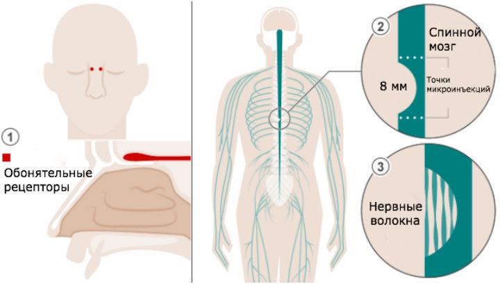 Форум массаж для увеличения груди
