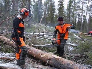 того, робота україна вальшчик ліса это лучший