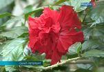 Международный симпозиум «Сигнальные системы и поведение растений» прошел в Петербурге