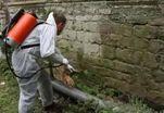 Бактерии работают реставраторами
