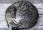 Кошка может заменить аспирин