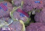 От фиолетовых овощей становишься умнее