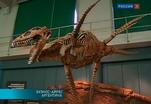 В Аргентине восстановили скелет древнего плезиозавра
