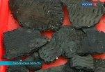 В Смоленской области археологи исследуют поселение эпохи неолита