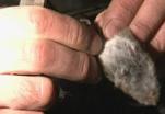 Любимое блюдо Тимофея Баженова - каша с мышами