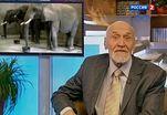 Уши заменяют слонам зрение