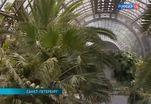 Пальмовую оранжерею причислили к объектам культурного наследия регионального значения