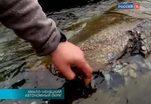 На Ямале обнаружены останки доисторического животного