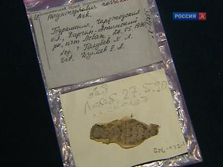 В Зоологическом музее МГУ исследуют гены животных из собственной коллекции