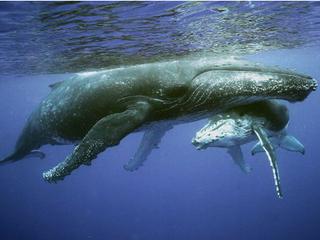 Загар у китов