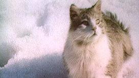 Зоологи выяснили, зачем кошки трутся о хозяина