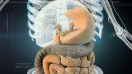 Внутренние органы из полимеров