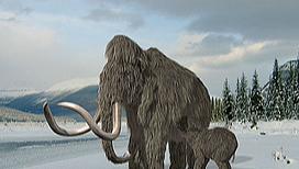 Где будут расселять клонированных мамонтов?