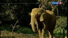 Слоны смеются шуткам