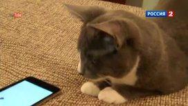 Кошек мобильные приложения интересуют больше, чем  собак