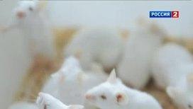 Светящиеся мыши помогают бороться с диабетом