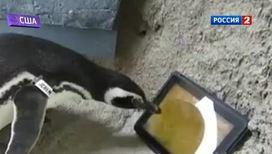 iPad для пингвинов