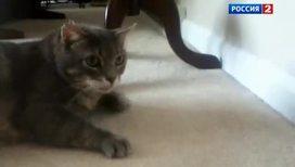 Кошачий шпионаж: скандальные тайны увидели свет