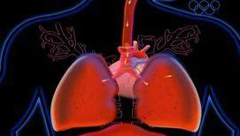 Как влияет желудок человека на голос?