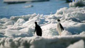 В таянии льдов на Антарктиде виноват вулкан