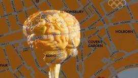 Ученые: у лондонских таксистов мозг больше, чем у других людей
