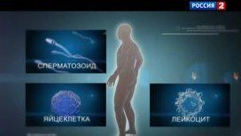 Половые органы наиболее уязвимы перед излучением