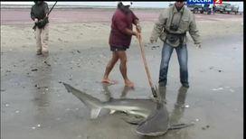 Как поймать акулу с берега
