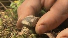 Некоторые грибы размножаются при помощи дыма
