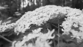 Советские генетики вывели растение-монстр