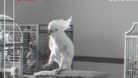 Научно доказано, что животные умеют танцевать