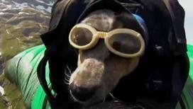 Парашютистами могут стать даже собаки