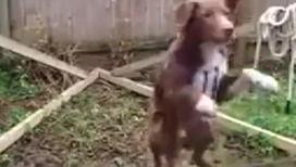 Уникальные спортивные достижения собак
