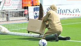 Пчелы свили гнездо прямо на футбольных воротах